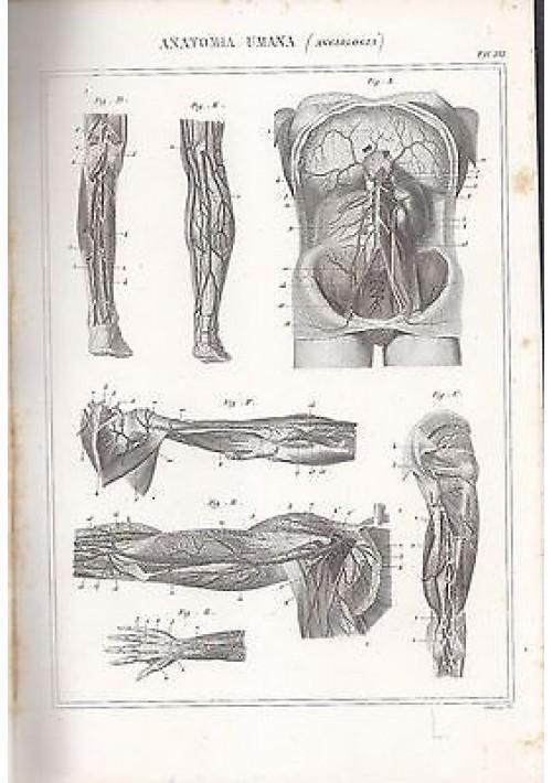 ANATOMIA UMANA ANGIOLOGIA BRACCIA TORACE INCISIONE STAMPA RAME 1866 TAVOLA