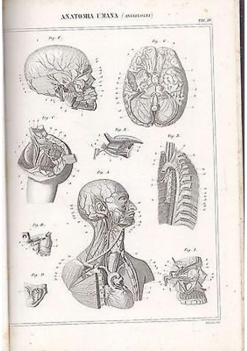 ANATOMIA UMANA ANGIOLOGIA CRANIO INCISIONE STAMPA RAME 1866 TAVOLA ORIGINALE
