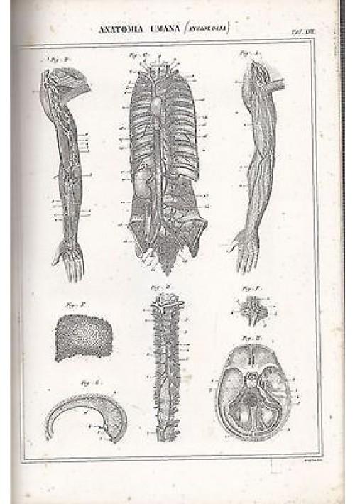 ANATOMIA UMANA ANGIOLOGIA braccia cranio INCISIONE STAMPA RAME 1866 TAVOLA