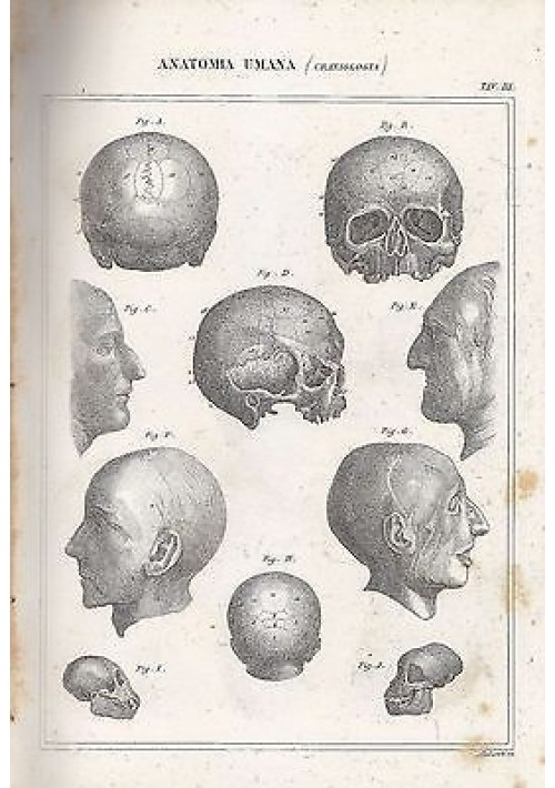 ANATOMIA UMANA CRANIOLOGIA GALL INCISIONE STAMPA RAME 1866 TAVOLA ORIGINALE