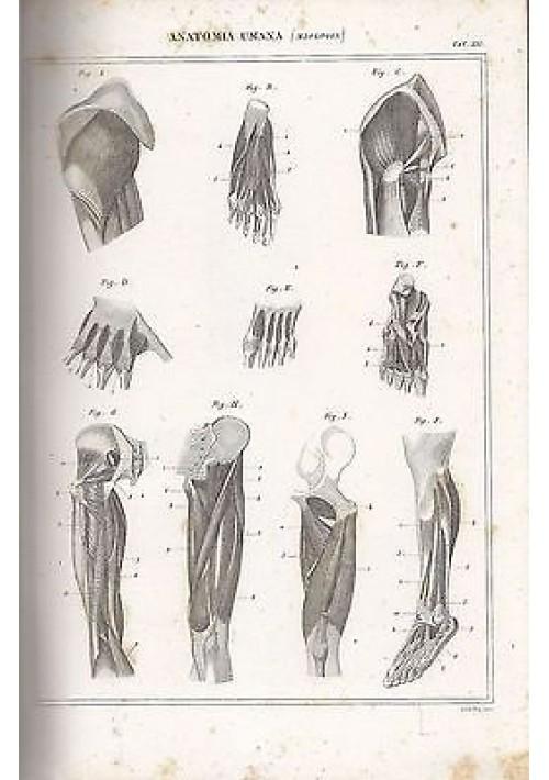 ANATOMIA UMANA MIOLOGIA MUSCOLI INCISIONE STAMPA RAME 1866 TAVOLA ORIGINALE