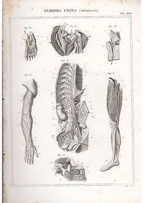 ANATOMIA UMANA NEUROLOGIA ARTI INCISIONE STAMPA RAME 1866 TAVOLA ORIGINALE