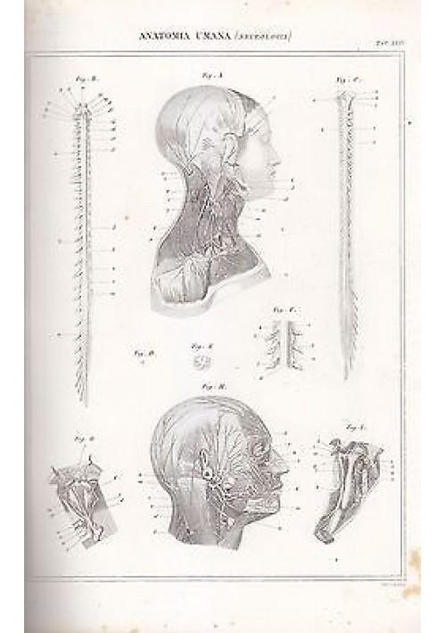 ANATOMIA UMANA NEUROLOGIA CRANIO INCISIONE STAMPA RAME 1866 TAVOLA ORIGINALE