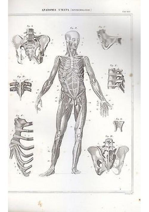 ANATOMIA UMANA (SINDESMOLOGIA  INCISIONE STAMPA RAME 1866 TAVOLA ORIGINALE