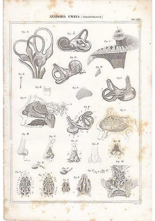 ANATOMIA UMANA SPLANCNOLOGIA INCISIONE STAMPA RAME 1866 TAVOLA ORIGINALE