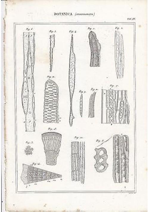 BOTANICA ORGANOGRAFIA INCISIONE STAMPA RAME 1866 TAVOLA ANTICA ORIGINALE