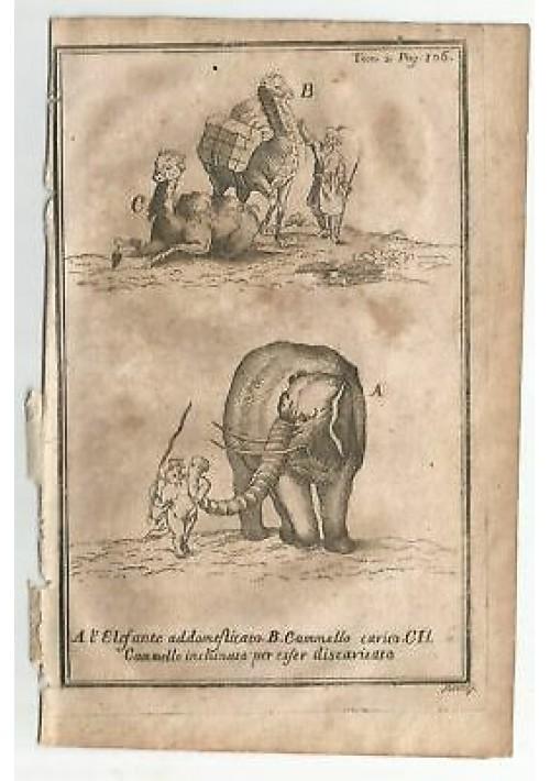 ELEFANTE CAMMELLO  1740 INCISIONE STAMPA RAME ANTICA GRAVURE QUADRO