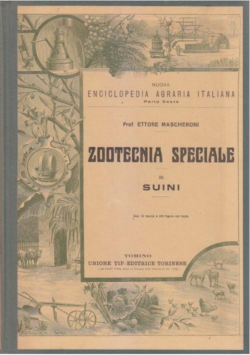 ZOOTECNIA SPECIALE SUINI di Ettore Mascheroni 1927 Utet enciclopedia agraria *